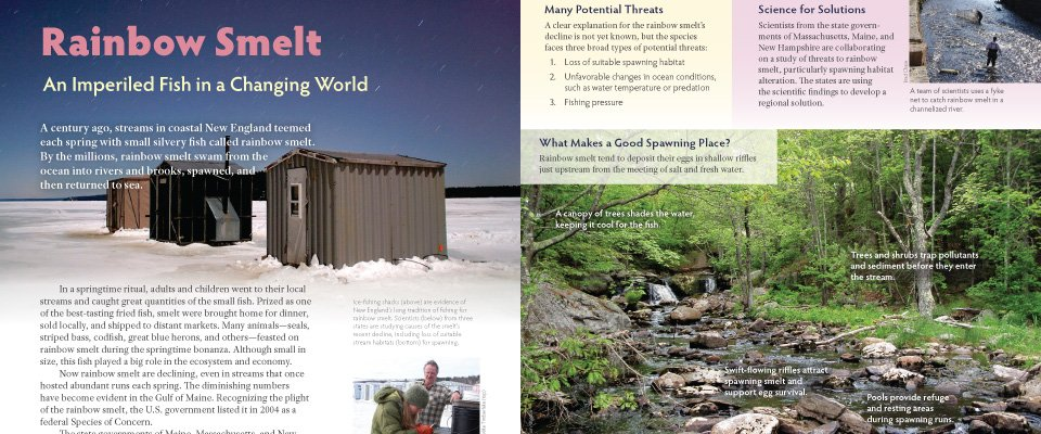 http://waterviewconsulting.com/wp-content/themes/Paradise/timthumb.php?src=http://waterviewconsulting.com/wp-content/uploads/2011/02/smelt.jpg&w=80&h=50&zc=1