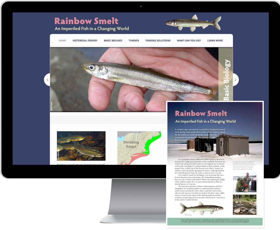 Rainbow Smelt Website and Brochure